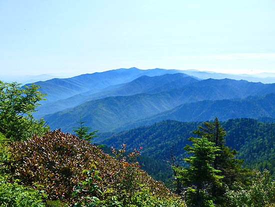 View from the saddle between Myrtle Point (6,546') and Mount Le Conte (6,593')